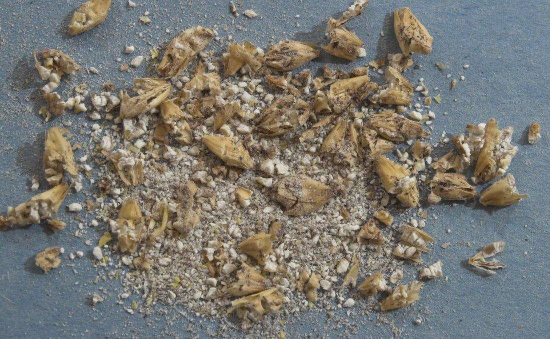 """Close de um moagem """"fina"""" em que os grãos foram previamente borrifados com água quente"""