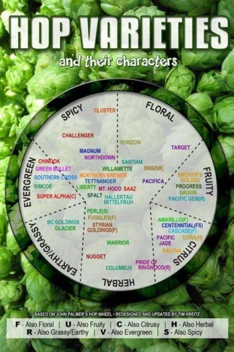 sabores e variedades dos lúpulos