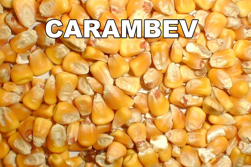 carambev